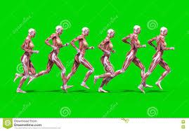 Female Anatomy Figure A Running Female Anatomy Figure Stock Illustration Image 71763020