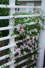 Trellis For Climbers Best Perennial Vine Plant For Shaded Trellis The Home Depot