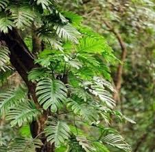 Tropical Plants Pictures - tropical rainforest plant facts