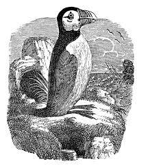 102 best free vintage bird graphics images on vintage