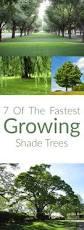 149 best garden trees images on pinterest garden trees backyard