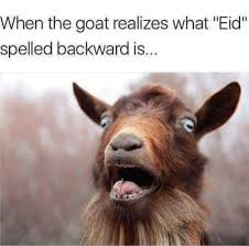 Funny Goat Memes - 12 eid al adha memes that are too funny to be allowed
