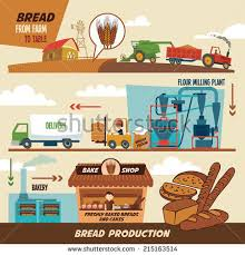 from farm to table stages production bread wheat harvest freshly stock vector 215163514
