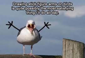 Funny Bird Memes - funny random meme dump album on imgur