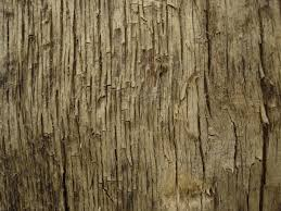 tree texture 11 by lunanyxstock on deviantart