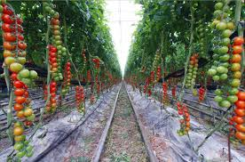 vegetable garden plants home outdoor decoration