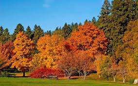 why do the leaves change color siowfa15 science in our world