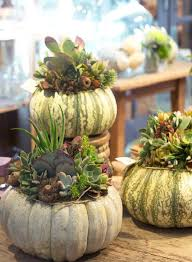ciao newport beach succulent ideas for fall
