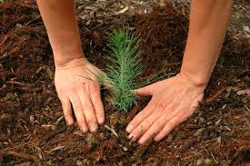 best time to plant trees garden myths