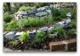 Rock Vegetable Garden Tips For Growing Herbs Indoors Or Outdoors