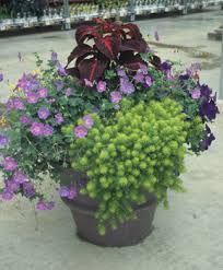 Plant Combination Ideas For Container Gardens - color considerations choosing and combining plants successful