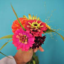 Cut Flower Garden by Cut Flowers U2013 Basmati Blogs