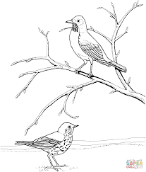 robins coloring pages free coloring pages