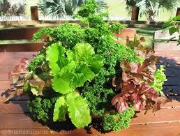 Vegetable Container Garden - 6 tips for abundant edible container gardens the micro gardener