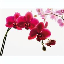 pink orchid flower wall mural 315cm x 232cm floral pink orchid flower wall mural 315cm x 232cm