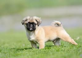 Meet 18 Designer Dog Breeds