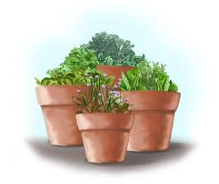 container gardening salad garden in containers bonnie plants
