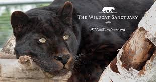 Minnesota wild animals images Minnesota laws on exotic pet owners and wild animals jpg