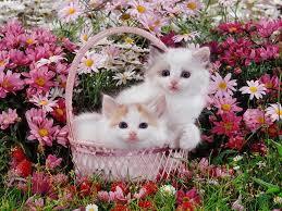 beautiful kittens beautiful kittens cross fruits garden flwoers cats kitties sweet