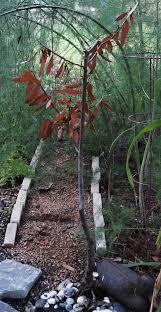 bay tree symbolism beatiful tree