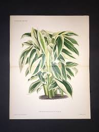 le horticole vasari gallery antique botany prints illustration