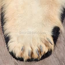 rug buffalo blanket polar bear rug polar bear teeth for sale