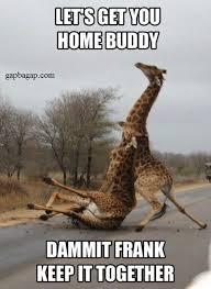 funny memes about drunk buddy memes pinterest drunk friends