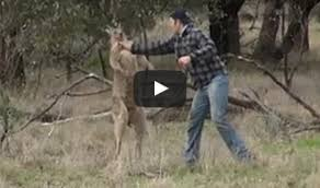 man who punched kangaroo to save his dog risked his life