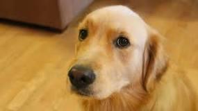 Image result for Dog's