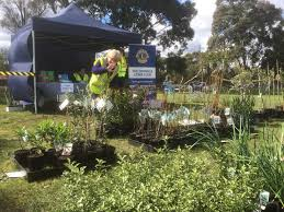 native plant sales donvale lions club spring plant sale melbourne