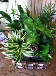213 best house plants u0026 wild ferns wild plants u0026moss ect images on