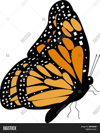 monarch butterfly l side view vector photo bigstock
