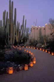 Scottsdale Az Botanical Gardens by 711 Best Cactus Y Crasas Images On Pinterest Plants