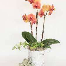flower delivery san jose flower delivery san jose flowers
