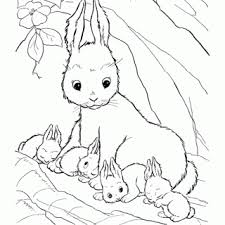 tag cute pictures bunnies color dibujo