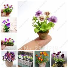 livraison de fleurs au bureau 2017 nouveau 50 pcs bonsaï graines de pensée mini graines de fleurs