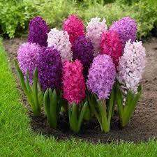spring to summer flower bulbs garden plants u0026 flowers the