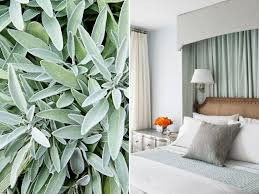 15 ways to decorate with soft sage green hgtv