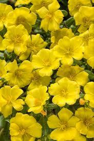 122 best color yellow garden design images on pinterest color