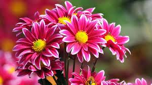 beautiful flowers wallpaper free download al164fq alhuda wallpaper