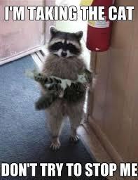 Animal Meme Pictures - 30 funny animal memes quoteshumor com
