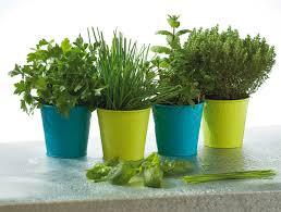 plante cuisine et épices