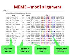 Meme Motif - motif discovery tutorial 5 motif discovery meme creates motif pssm