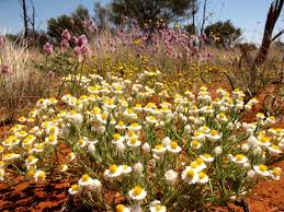 list of native australian plants australian wildlife conservancy