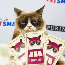 No Meme Grumpy Cat - the world s grumpiest cat grumpy cat