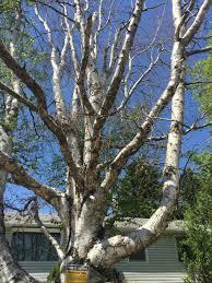 dying trees are expensive integer homes