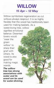 willow trees herbs plants and witches