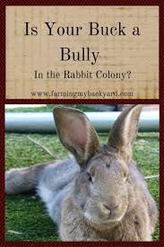 90 best raising rabbits images on pinterest raising rabbits
