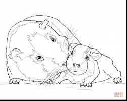 astounding baby guinea pig coloring pages with pig coloring page