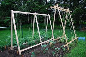trellis for cucumbers a growing tradition building new trellises for the garden